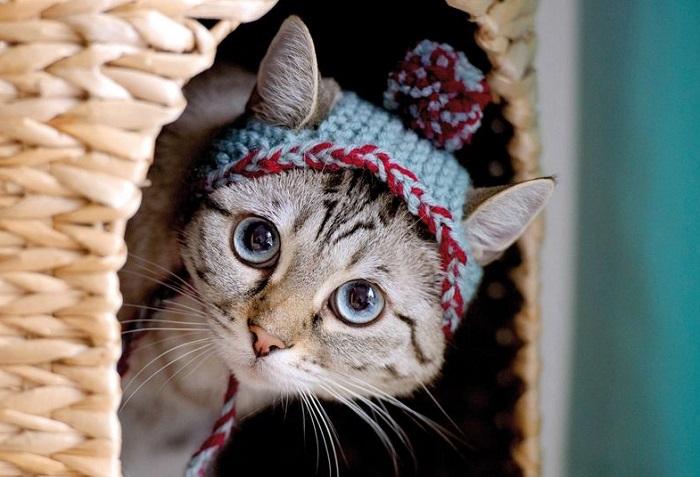 Котёнок соответствует последнему писку моды. (Фото AP).
