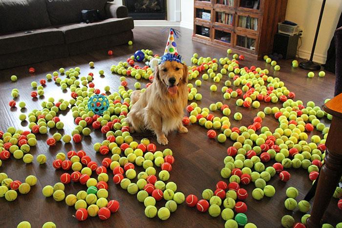 Я же просил купить мне на день рождение один новый мячик...