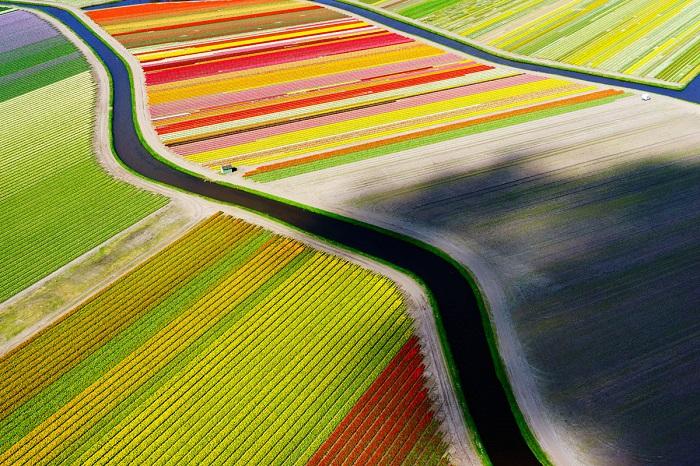 Поля тюльпанов в Голландии с высоты птичьего полета. Автор фото - Андерсом Андерсоном (Anders Andersson).