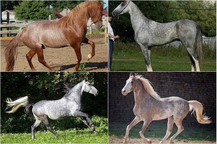 Самые редкие и красивые лошади мира.