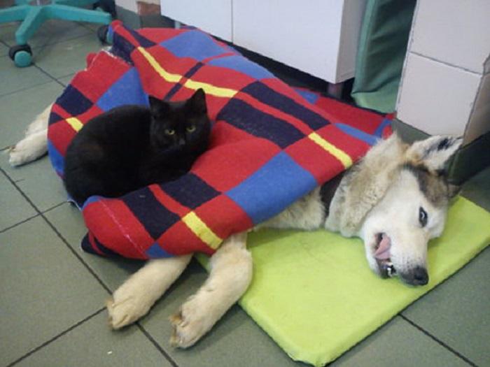 Кот старается согреть и помочь любому животному, оказавшемуся у ветеринаров приюта.
