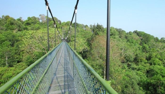 Высокий воздушный мост, соединяющий Хендерсон Уэйвс и Маунт Фэйбер, открывает невероятные виды.
