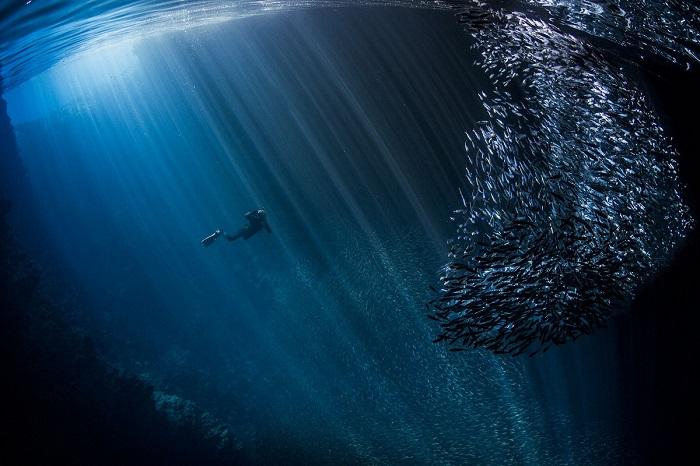 Почетной премией награжден автор снимка – австралийский фотограф Скотт Портелли (Scott Portelli).