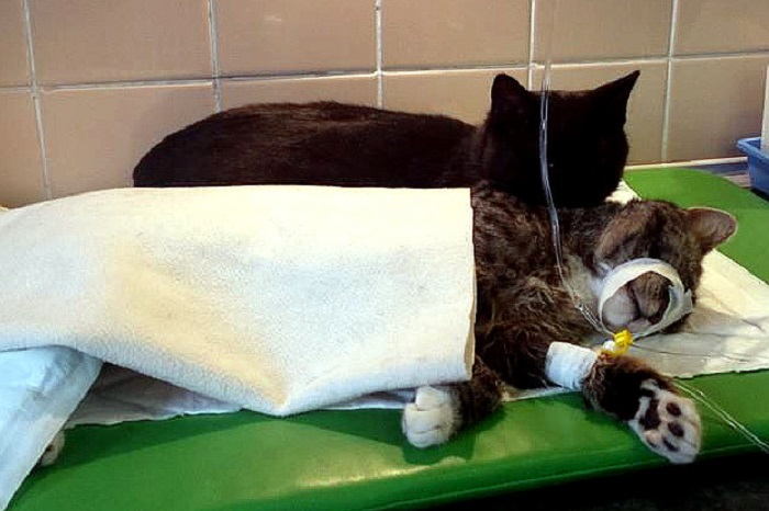Кот опекающий других животных.