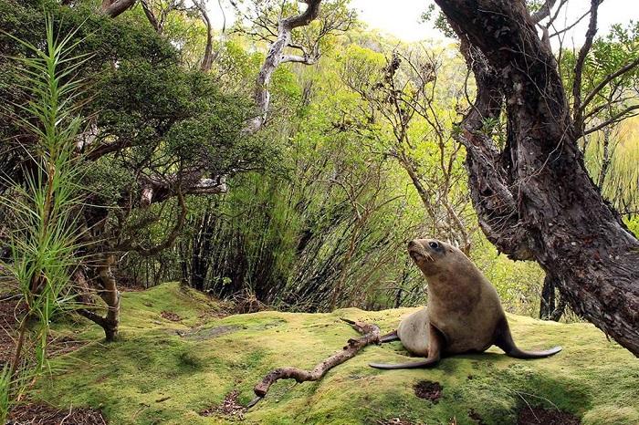 Отдых на перине из мха, Новая Зеландия. Фотограф: Jacob Anderson.