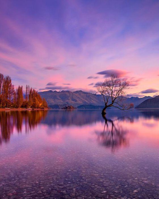 Одинокое дерево растет посреди прозрачной водной глади.