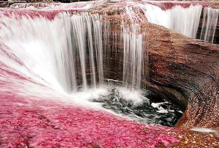 Река представляет собой продукт жизнедеятельности многочисленных водорослей и, в зависимости от времени года, насыщенность их цветов либо ослабевает, либо усиливается.