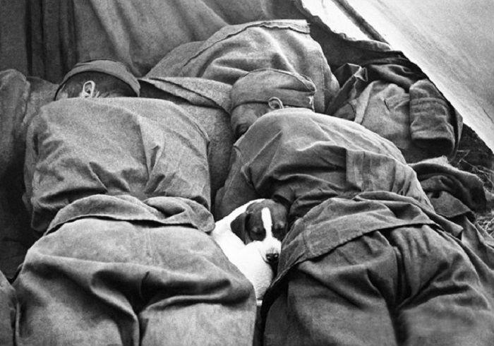 Спящие красноармейцы и собака.