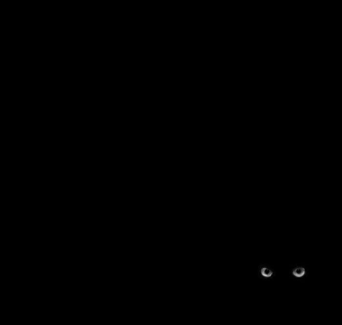 Уникальное черно-белое фото с таинственными глазами.