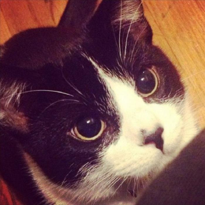 Если в солнечный день зрачки у кота огромные, значит он очень зол.