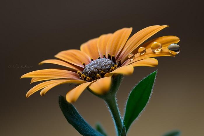 Удивительная красота природы. Автор фотографии: Сильвия Спедикато (Silvia Spedicato).