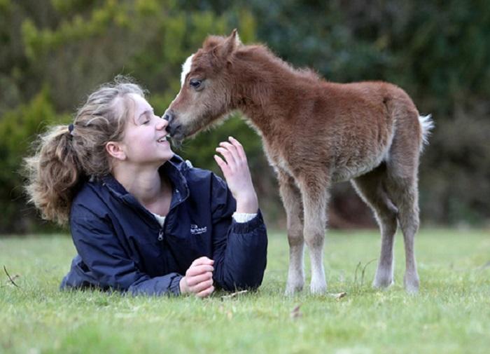 Лошадки очень хорошо ладят с детьми и становятся их лучшими друзьями.