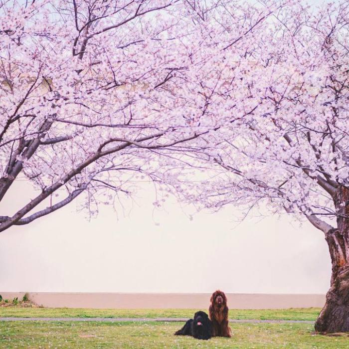Домашние любимцы под цветущими деревьями.