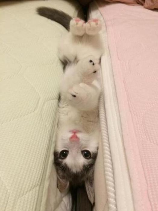 Эта кровать хочет меня съесть! Кто-нибудь думает меня спасти?