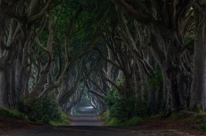Буковая аллея Дарк Хеджес, Северная Ирландия. Фотограф Piotr Galus.