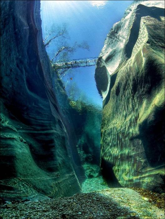 Вода в реке настолько чистая, что со дна видно поверхность.