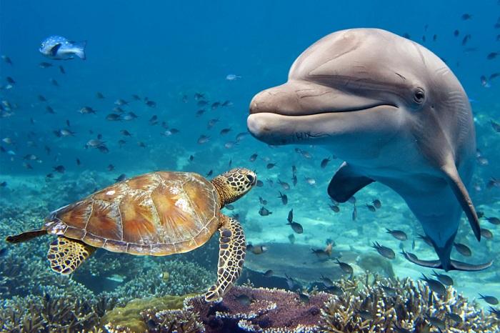 Фантастический мир подводного царства.