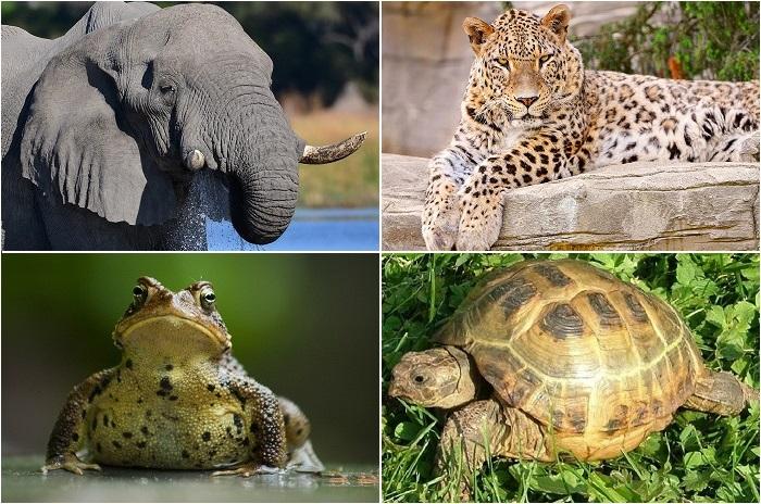 Животные, которых часто путают.