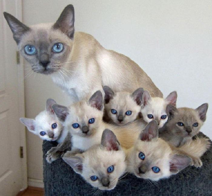 Кошка и её мини-копии.