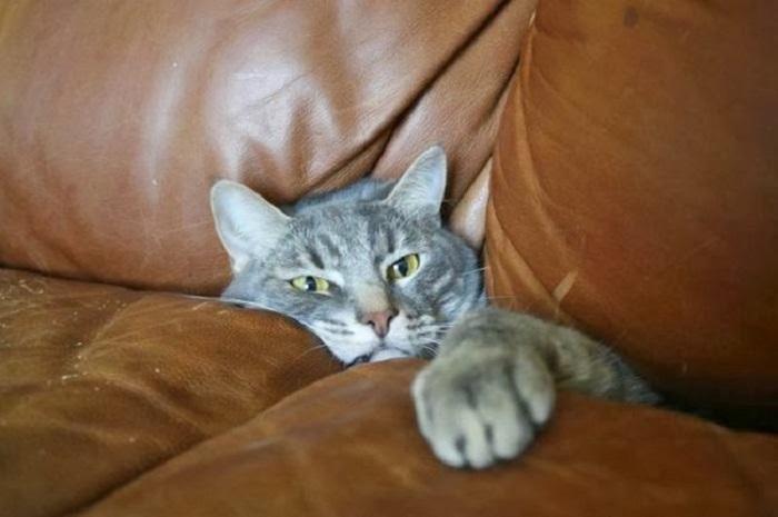 Этот диван будет уничтожен, если вы немедленно меня отсюда не освободите!