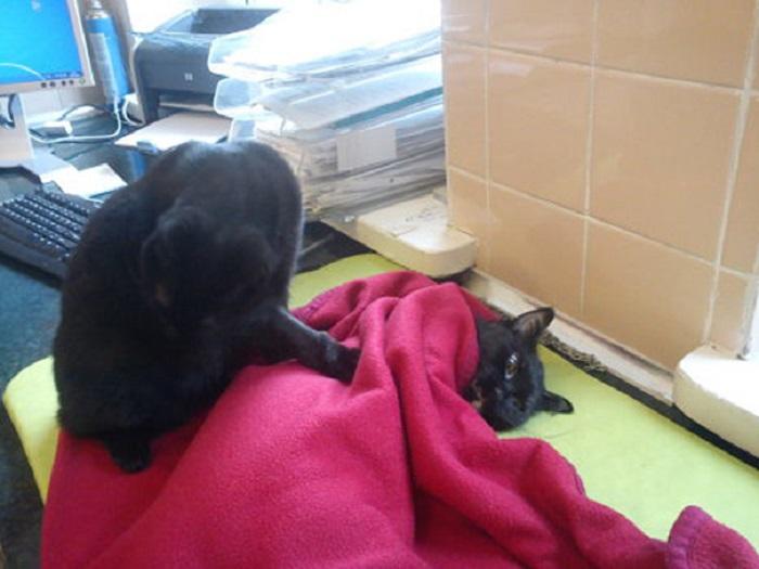 Котейка умеет лечить других животных.