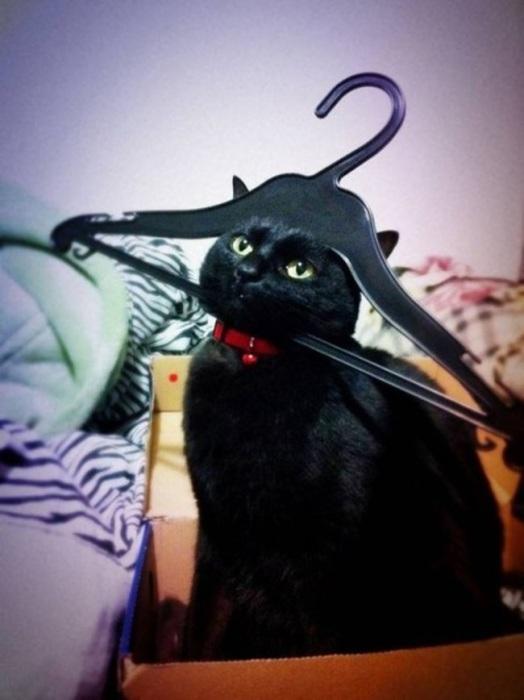 Ну чёрный-чёрный я кот и хватит меня сравнивать...