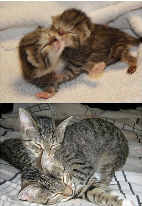 2 года спустя, а кошки по-прежнему любят обниматься.