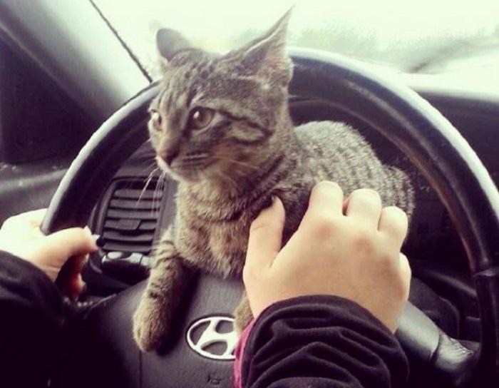 Поездка к ветеринару.