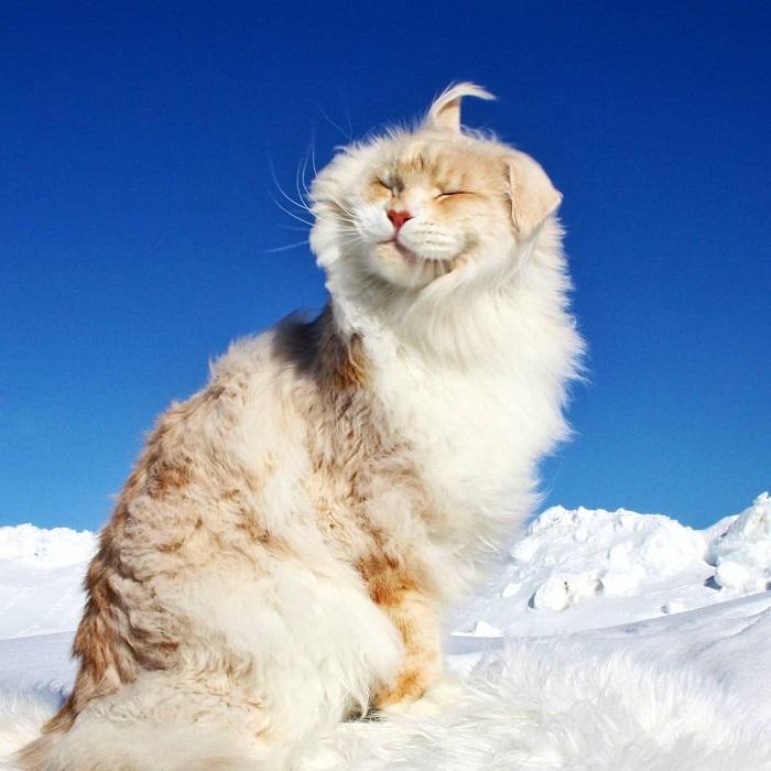 Яркие кадры с огромным Лотосом собирают множество восторженных откликов в Instagram, и не только от любителей кошек.