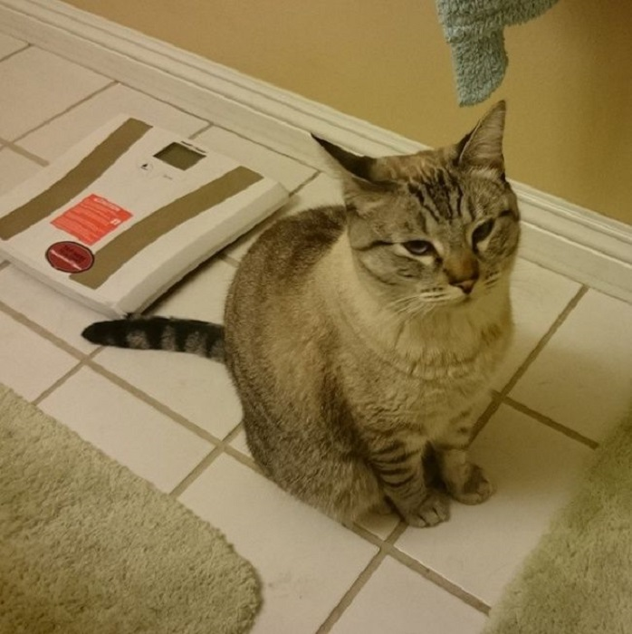 Беспричинно смотрящий кот с недоверием относится к хозяевам.