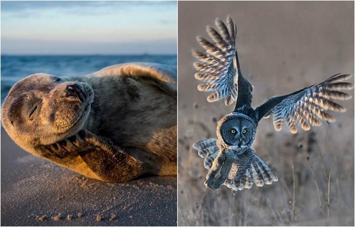 Удивительные снимки, демонстрирующие необычайность и разнообразие дикой природы.