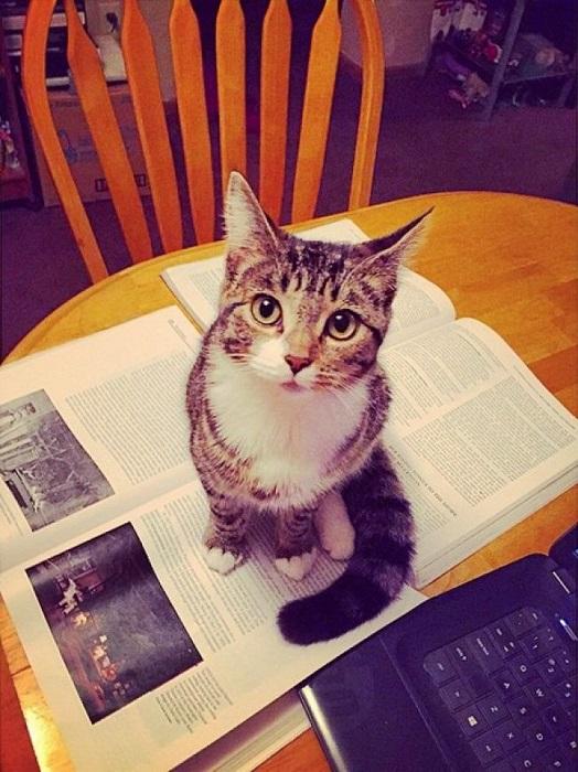 Когда открываешь книгу, ноутбук, газету или начинаешь что-то писать, он обязательно придет и усядется на это место.