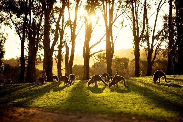 Австралия - мечта любого путешественника.
