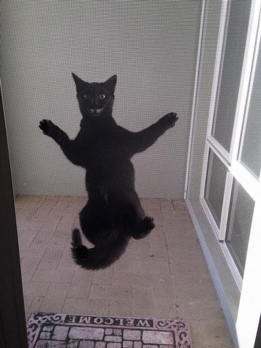 Для кота преград не существует.