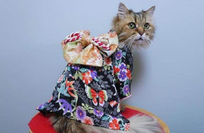 Очаровательные котейки, которых хозяева одели в кимоно.