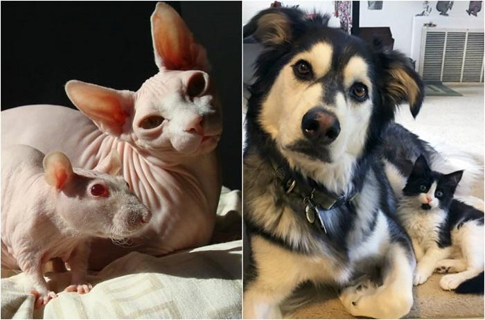 Животные-близнецы от разных родителей.