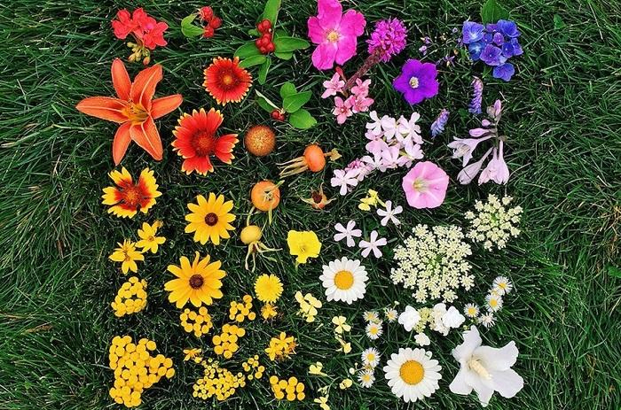 Каждый цветок уникален и неповторим, как и каждое создание на Земле.