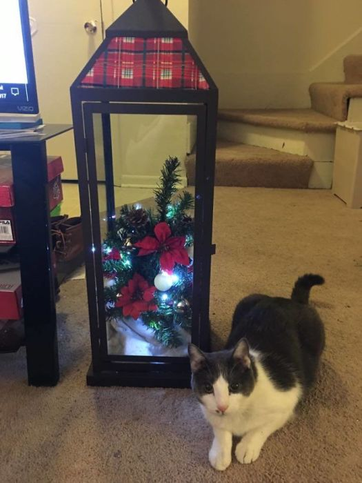 Оригинальное и элегантное решение, которое позволяет уберечь маленькую елку от кошки.