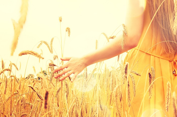 Женская красота на золотом пшеничном поле. Автор фотографии Наталья (Natalia).