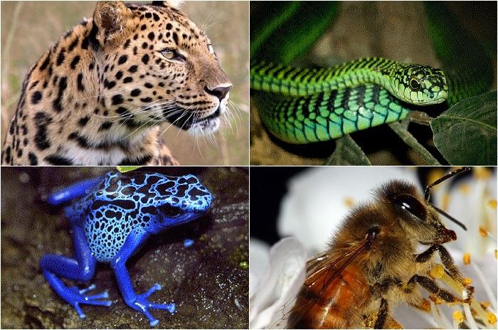 Самые опасные существа на планете.