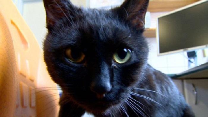 Выживший кот после воспаления верхних дыхательных путей сам помогает другим.