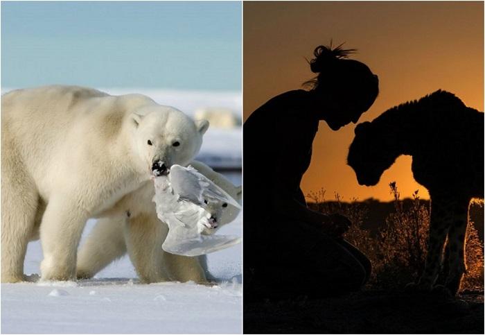 Лучшие фотографии от National Geographic 2015.