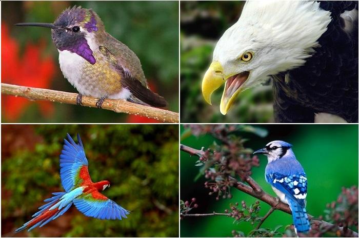 Удивительные птицы планеты.