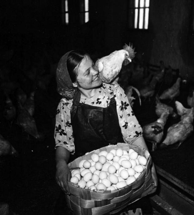Девушка и петух, г. Кировск, Заполярье, 1950 год. Фотограф Яков Рюмкин.