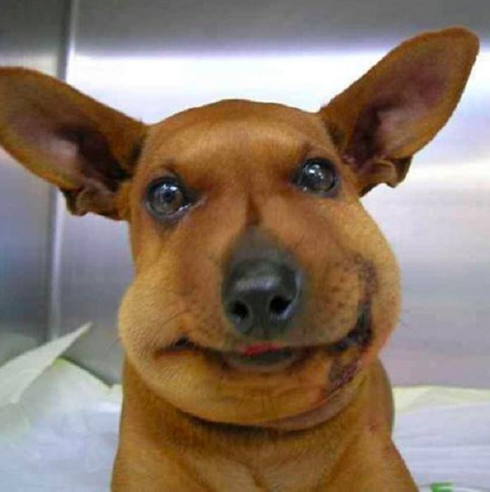 Пёс, который решил попробовать пчелу на вкус.