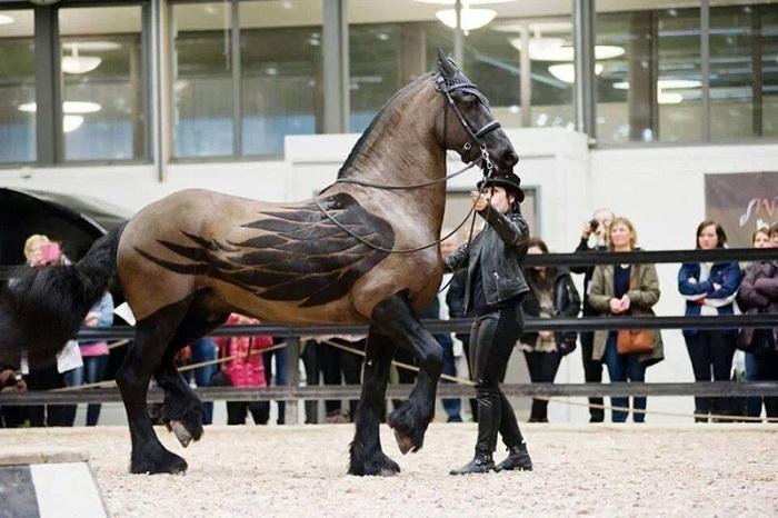 Крылатый конь из древнегреческой мифологии. Фотограф Карли Брук (Carly Brooke).
