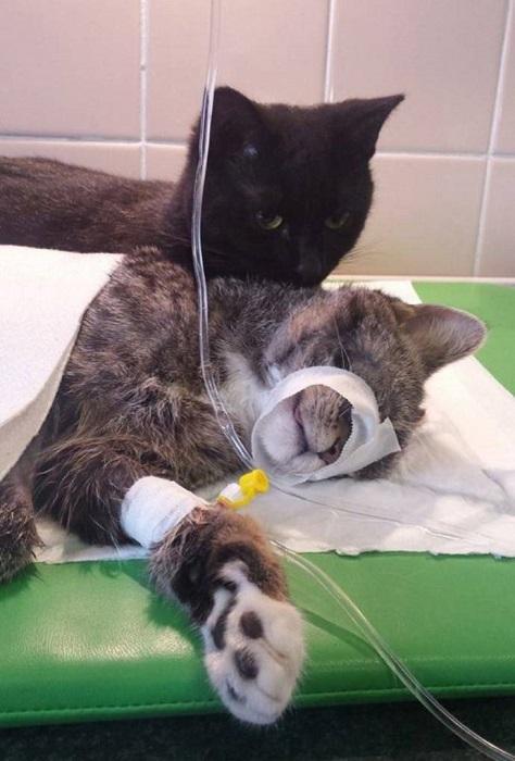 Помощник медперсонала - черный кот Радеминс.