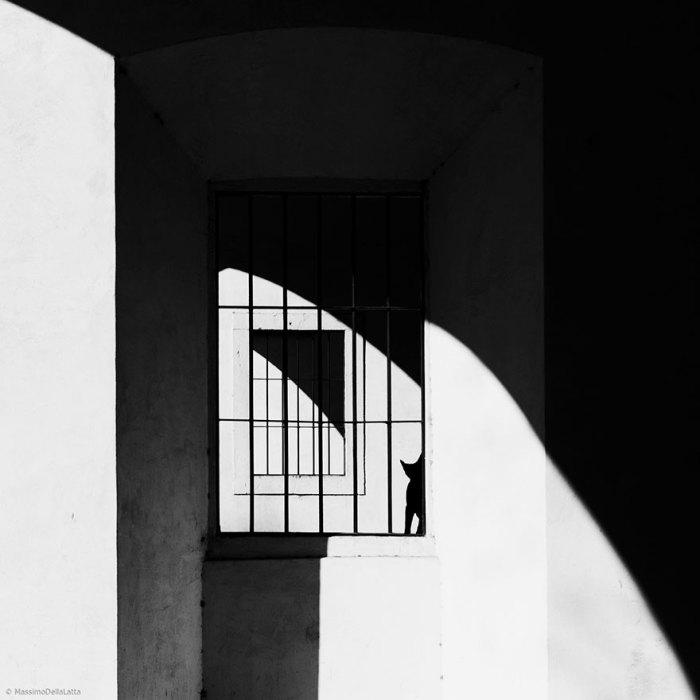 Своенравный кот прячется за решетками окна.