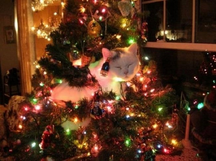 Кот пригрелся от елочных огоньков и уснул.
