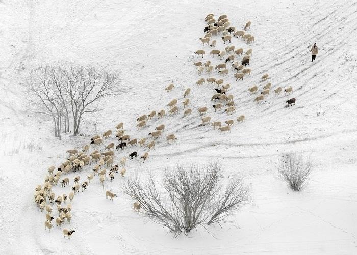 Почетной премией награжден автор снимка – китайский фотограф Муйан Чжоу (Muyang Zhou).